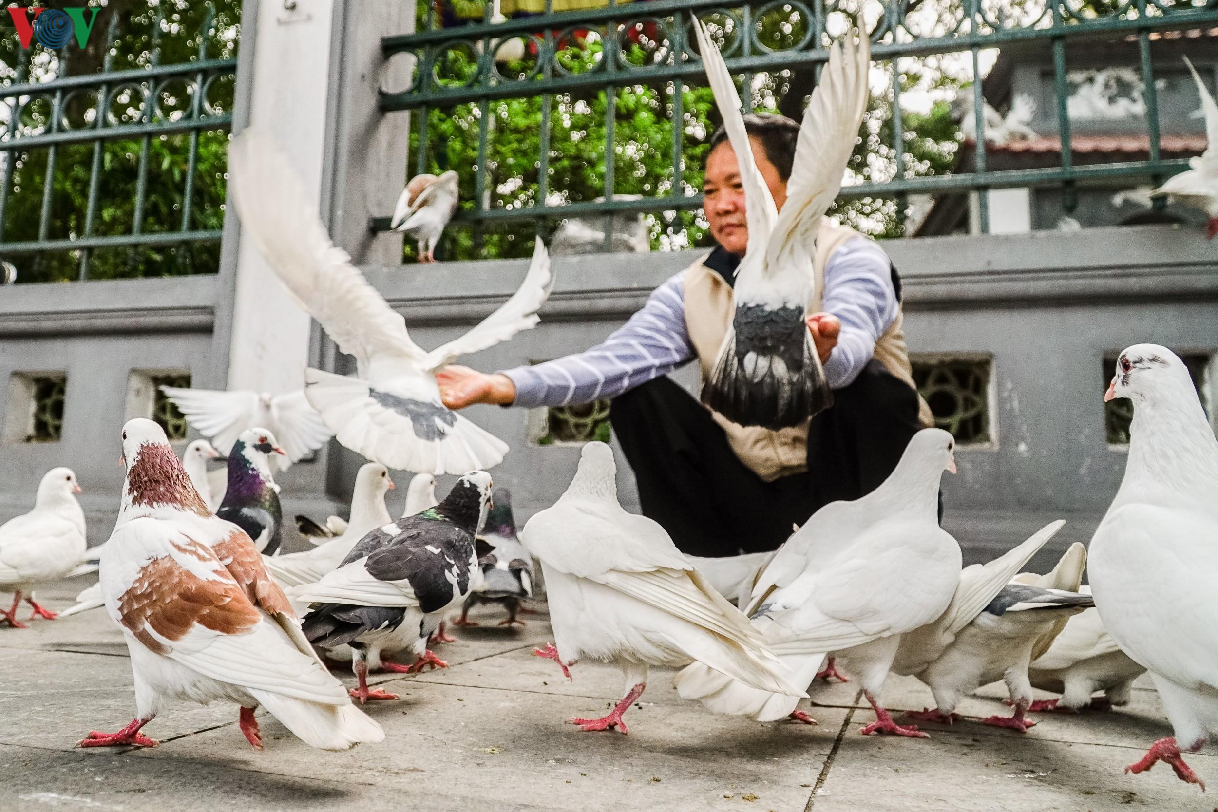 Ngắm đàn chim bồ câu bên hồ Hoàn Kiếm Ảnh 7