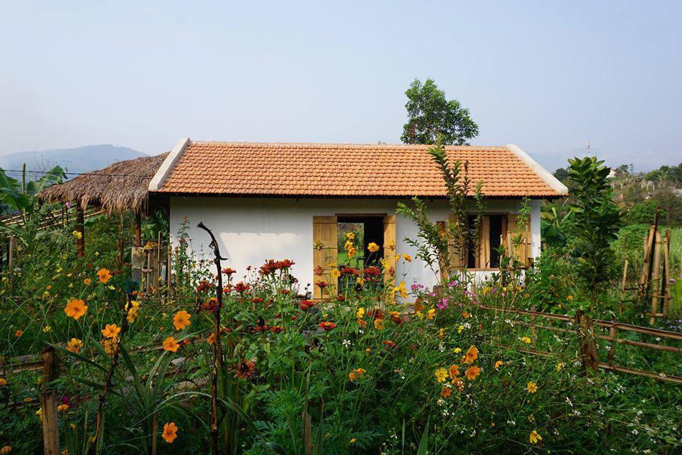 9x từng đi bar tới sáng, bỏ Sài Gòn về Khánh Hòa xây nhà, làm vườn Ảnh 2
