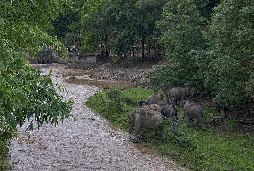 'Thất nghiệp', voi Thái Lan đi bộ từ khu du lịch về quê Ảnh 4