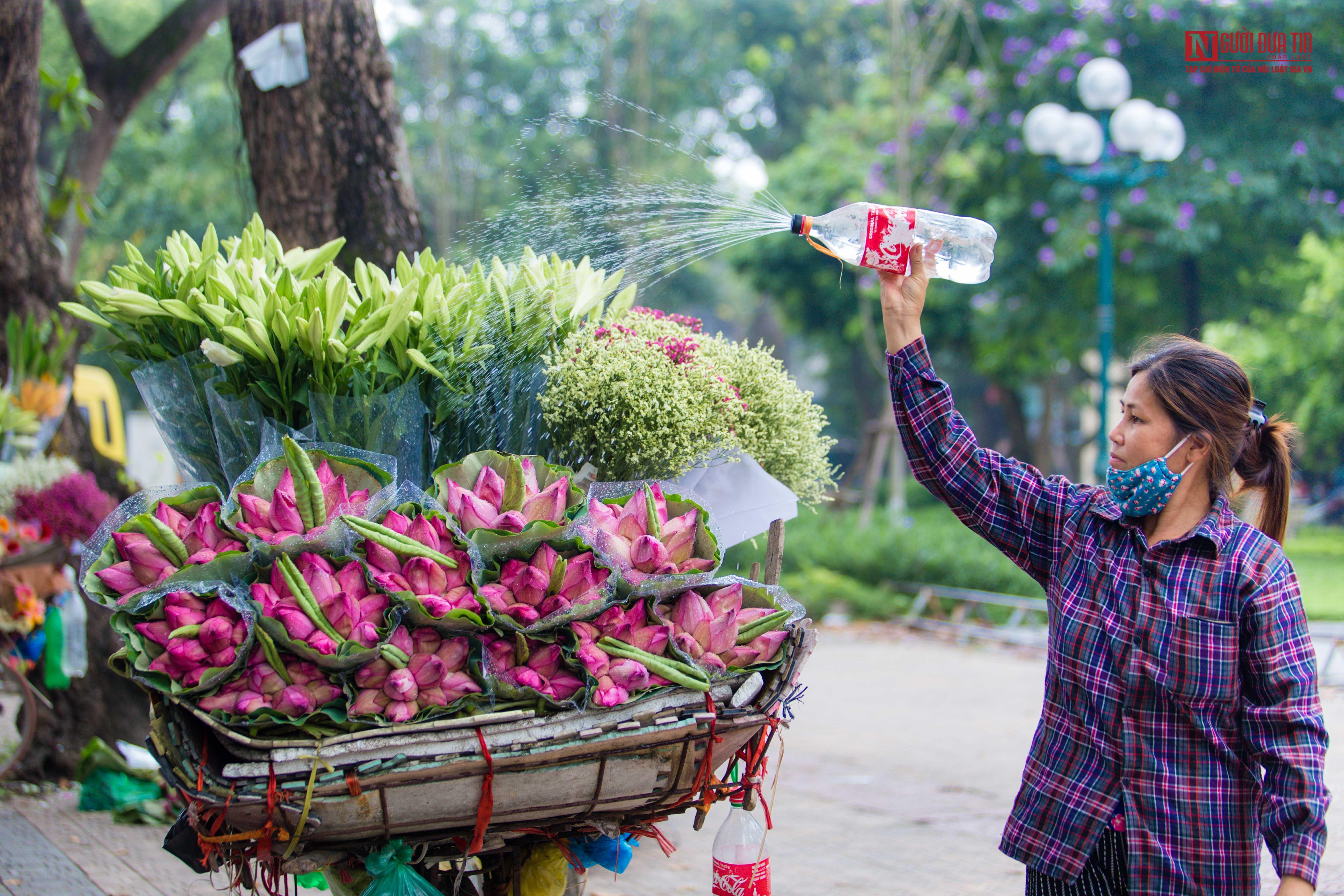 Hoa sen đầu mùa rong ruổi khắp phố phường Hà Nội Ảnh 9