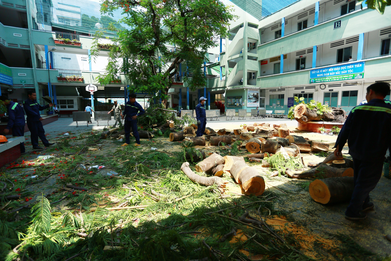 Cận cảnh gốc phượng vĩ mục ruỗng đổ gãy đè 13 học sinh thương vong ở Sài Gòn Ảnh 1