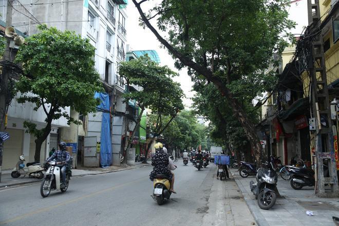 Cận cảnh hàng loạt cây xanh mục gốc, ngả hướng ra giữa đường ở Hà Nội Ảnh 2