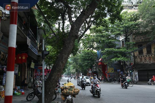 Cận cảnh hàng loạt cây xanh mục gốc, ngả hướng ra giữa đường ở Hà Nội Ảnh 7