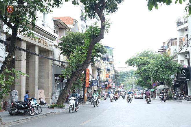 Cận cảnh hàng loạt cây xanh mục gốc, ngả hướng ra giữa đường ở Hà Nội Ảnh 4