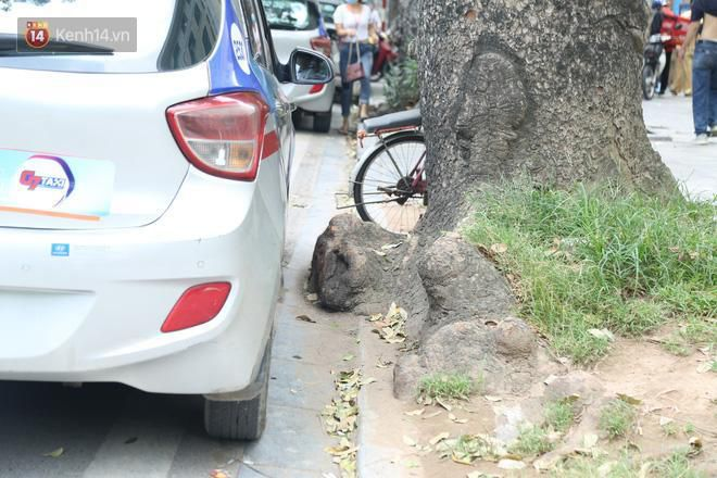 Cận cảnh hàng loạt cây xanh mục gốc, ngả hướng ra giữa đường ở Hà Nội Ảnh 13