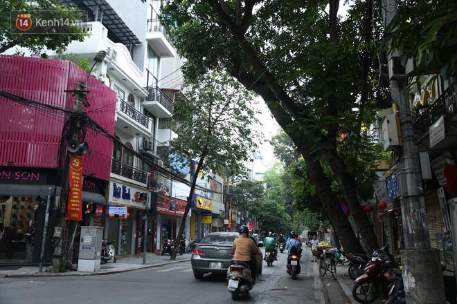 Cận cảnh hàng loạt cây xanh mục gốc, ngả hướng ra giữa đường ở Hà Nội Ảnh 8