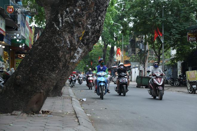 Cận cảnh hàng loạt cây xanh mục gốc, ngả hướng ra giữa đường ở Hà Nội Ảnh 3