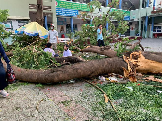 Cận cảnh hàng loạt cây xanh mục gốc, ngả hướng ra giữa đường ở Hà Nội Ảnh 1