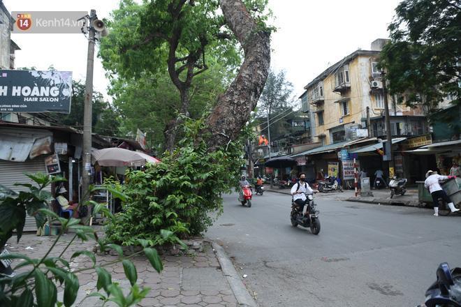 Cận cảnh hàng loạt cây xanh mục gốc, ngả hướng ra giữa đường ở Hà Nội Ảnh 5