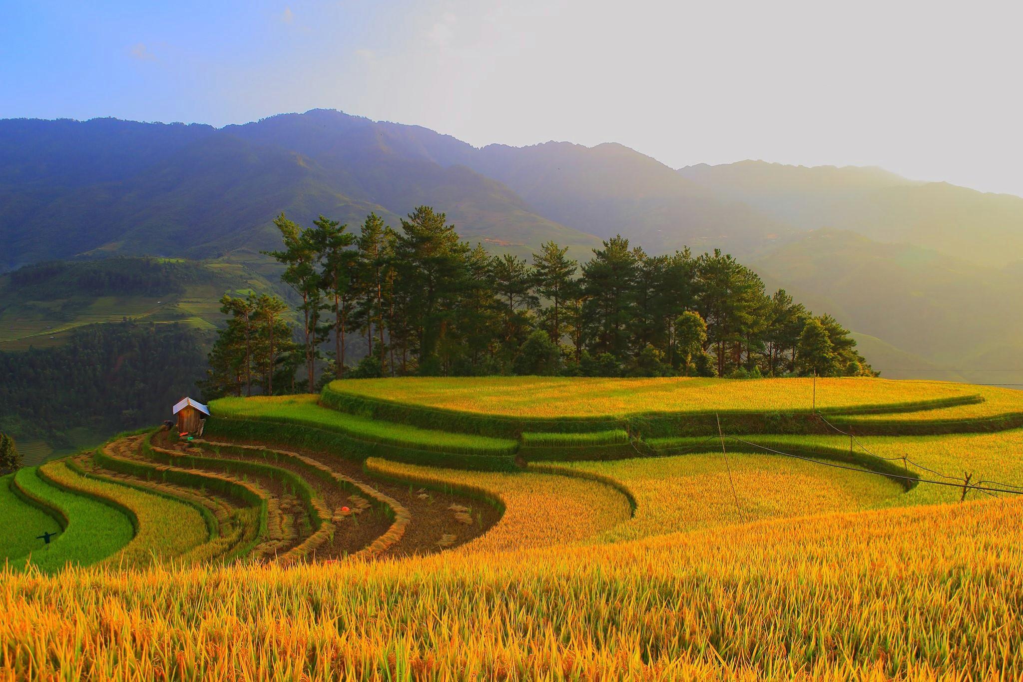 Ảnh dự thi 'Việt Nam trong tôi': Vẻ đẹp Sáng Nhù - Mù Cang Chải Ảnh 2