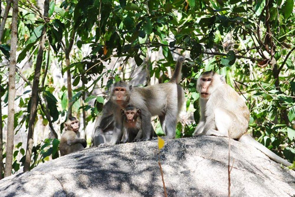 Image result for chùa khỉ
