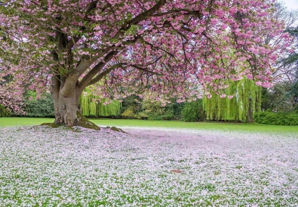 Khung cảnh mùa xuân ở đâu đẹp nhất trên hành tinh này? - Báo VOV