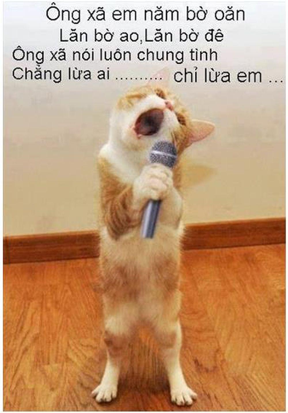 Mèo hát karaoke với bài \