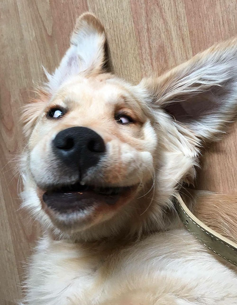 Nằm vật ra bắt chước dáng cậu chủ khi say rượu, chú chó khiến mọi người bật cười. (Nguồn Bored Panda)