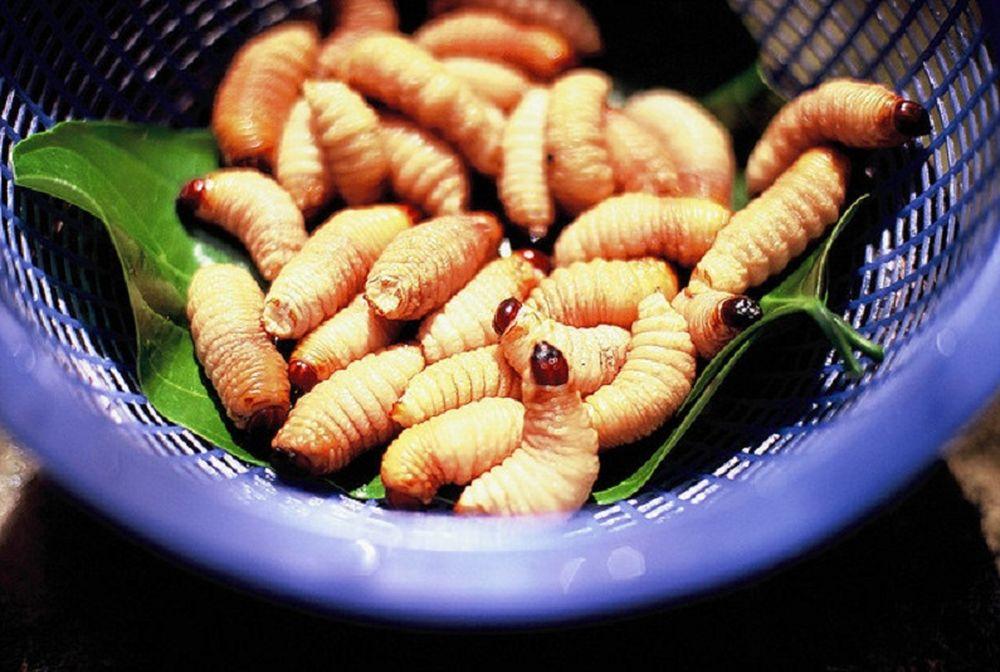 Đuông dừa được chế biến thành nhiều món ăn khác nhau, trong đó phổ biến  nhất là món đuông chấm nước mắm ăn sống. Ngoài ra, nó còn được chế biến  thành ...