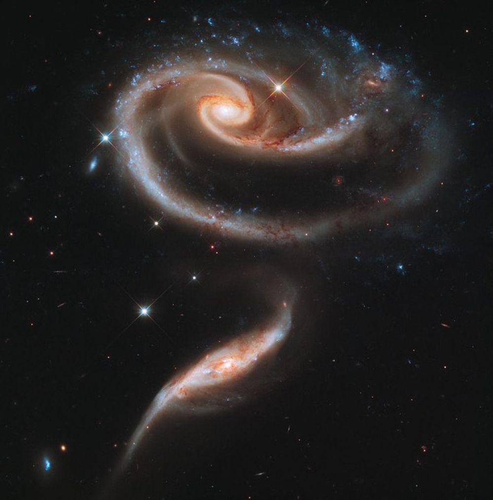 Hình dạng hoa hồng đặc biệt của hai thiên hà lớn này tạo ra bởi lực hấp dẫn kéo xuống phía dưới nó. Hai thiên hà tương tác này có tên gọi ...