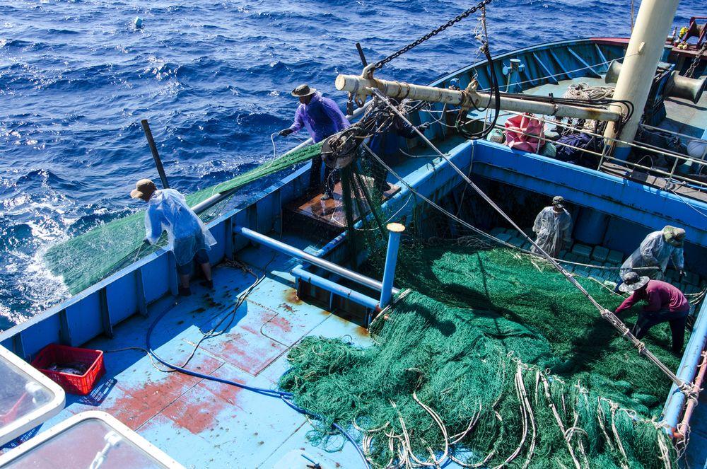 Ngư Dân Phải Mất 4 Tiếng Đồng Hồ Mới Kéo Hết Giàn Lưới Rê, Nhưng Nếu Bị Tàu  Giã Cào Xé Nát Thì Thời Gian Kéo Lưới Mất Cả Nửa Ngày. Ảnh: Văn Chương
