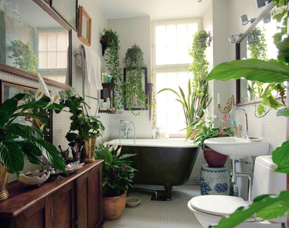 Kết quả hình ảnh cho cây xanh trong phòng tắm