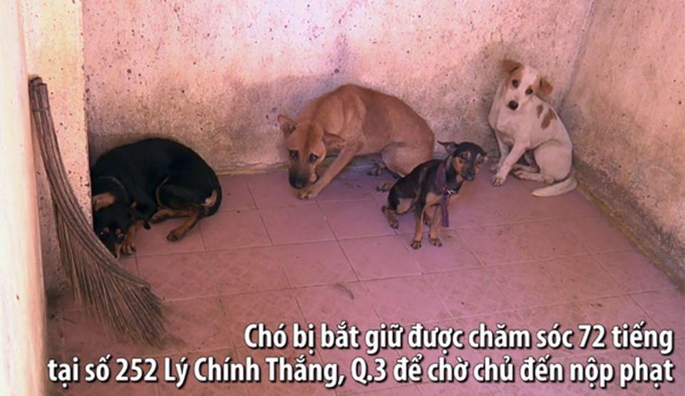 Những con chó thả rông bị giữ tại 252 Lý Chính Thắng (hình ảnh cắt từ clip)