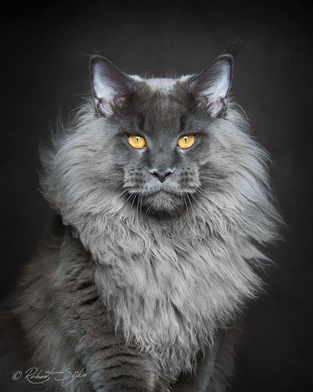 ảnh đại diện mèo
