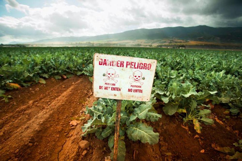 Thuốc diệt cỏ làm tăng 41% nguy cơ mắc ung thư hạch? - Báo
