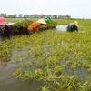 Lũ trên sông Cửu Long vẫn diễn biến phức tạp