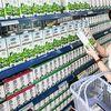 'Lộ' đại gia tranh mua cổ phiếu Vinamilk với tỷ phú Thái Lan