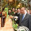 Thủ tướng Nguyễn Xuân Phúc: Sâm Ngọc Linh sẽ tạo nên dấu ấn lịch sử