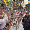 Chợ hoa cổ nhất Hà Thành nhộn nhịp ngày đầu mở cửa