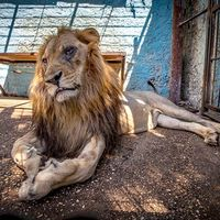 Kinh hoàng động vật bị 'cầm tù' trong sở thú địa ngục