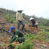 Đẩy mạnh giao rừng và đất lâm nghiệp