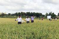 Trà Vinh tạo bước chuyển biến tích cực cho sản xuất nông nghiệp