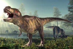 Phát hiện hộp sọ còn nguyên vẹn của khủng long bạo chúa