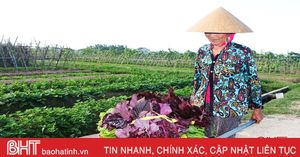 Vựa rau lớn nhất Hà Tĩnh 'khởi động' vụ đông