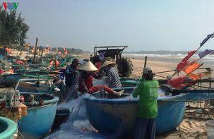 Ngư dân Phước Hải giàu lên từ nghề thuyền thúng