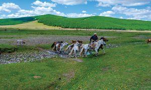 Đi tìm thiên sứ rừng Taiga ở Mông Cổ