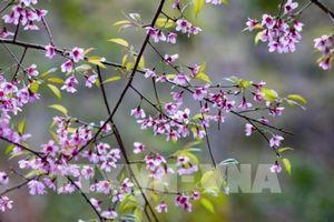 Chiêu Ly mùa xuân về