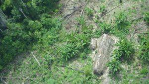 Brazil tổ chức đoàn thám hiểm bảo vệ bộ lạc nguyên thủy biệt lập