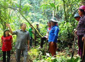 Giữ rừng xanh nơi biên viễn