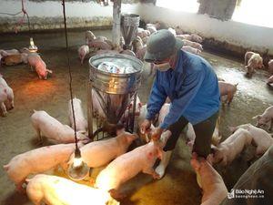 Yên Thành ứng phó cấp bách với dịch tả lợn châu Phi