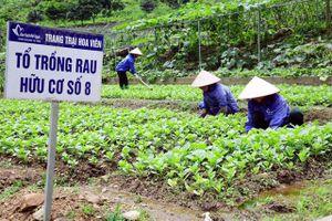Thúc đẩy xây dựng chuỗi nông sản an toàn