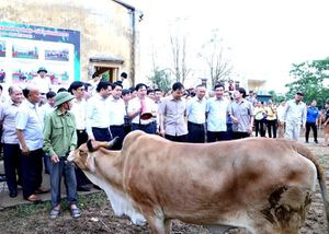 Bộ trưởng Nguyễn Xuân Cường thăm 'đảo bò Kobe' của Thủ đô Hà Nội