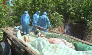 Người dân Quảng Ngãi vứt xác lợn nhiễm bệnh tràn lan