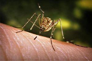 Ca nhiễm virus Tây sông Nile đầu tiên tại Bulgaria