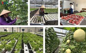 Nông nghiệp công nghệ cao giúp nông dân Quảng Ninh 'đổi đời'