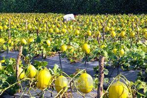 Tìm đầu ra cho nông sản: Bài 1 - Bước ngoặt từ công nghệ