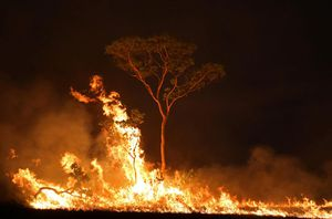 TT Brazil tuyên bố rừng Amazon 'không cháy mà tràn ngập của cải'