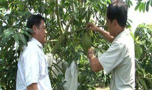 Nông dân Hậu Giang làm giàu với mô hình làm nông thông minh