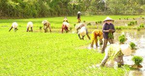 Cơ cấu lại chủng loại gạo xuất khẩu
