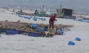 Bão số 6 đổ bộ khu vực ven biển Phú Yên, Khánh Hòa, chưa ghi nhận thiệt hại về người